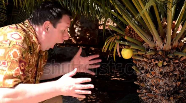 A tourist found an apple on a palm tree video footage for sale.