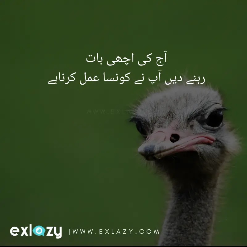 Funny Urdu Status