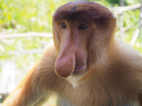 Niesamowite zwierzęta Borneo