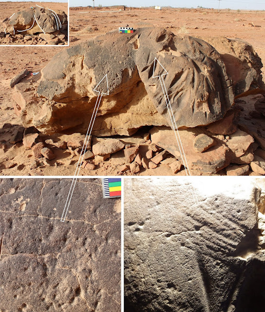 Life-sized camel carvings in Northern Arabia date to the Neolithic period