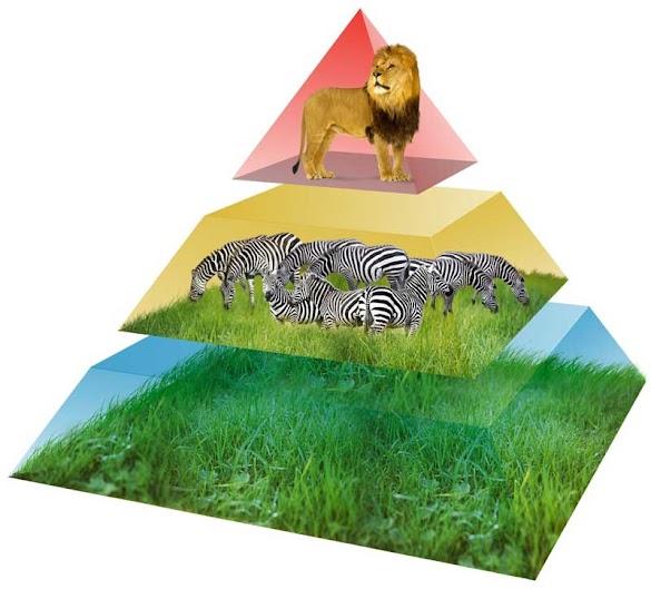 Pengertian Piramida Makanan dan Contohnya