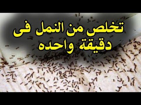 تعاني من النمل..... لا تقلقي ب 4 طرق طبيعية لن تزعجك مشكلة النمل مرة أخرى