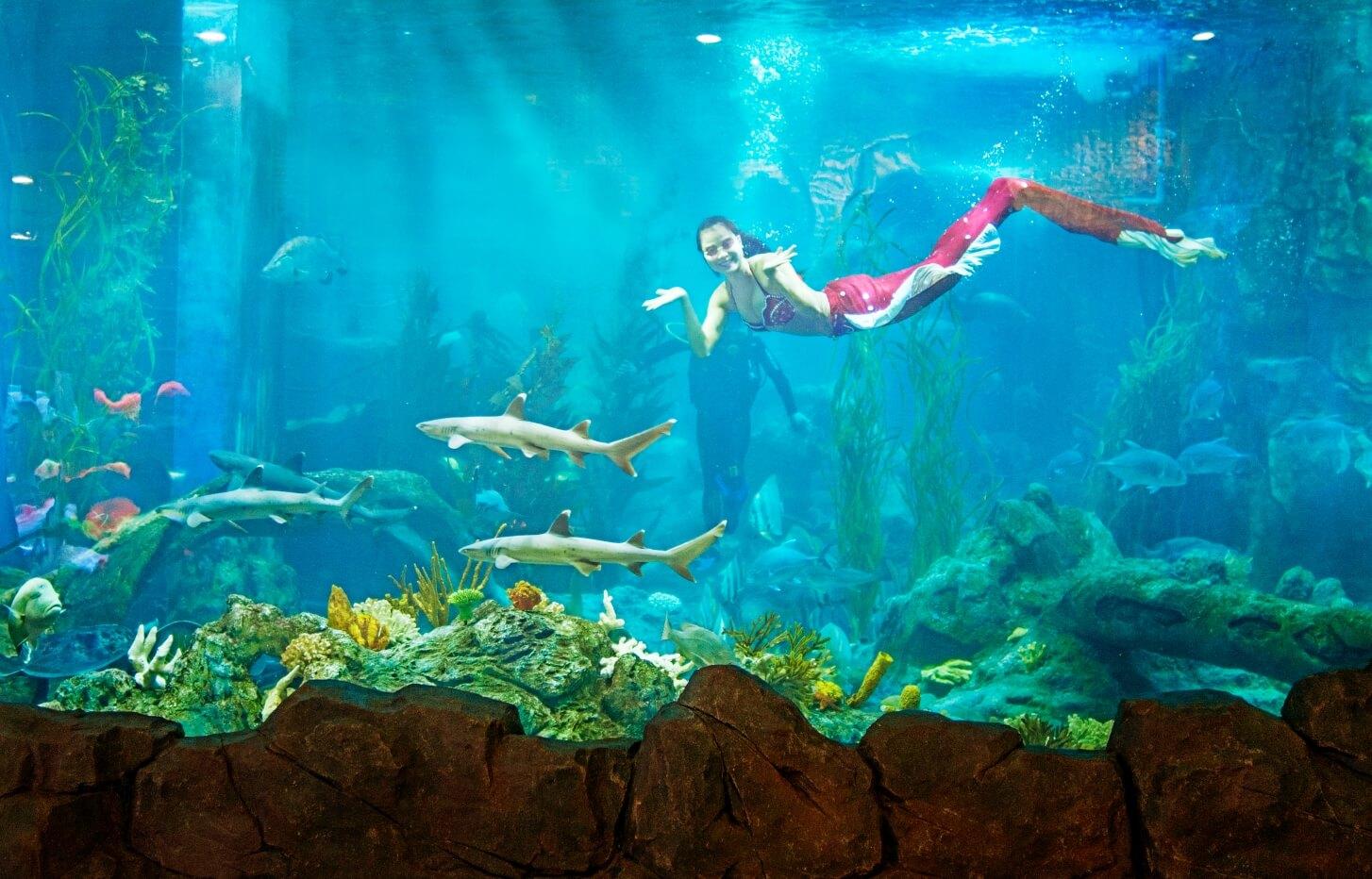 Các nàng tiên cá đang bơi lội trong thuỷ cung Vinpearlland