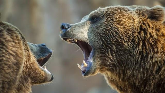 A látogatók előtt sebeztek halálra medvék egy dolgozót egy sanghaji vadasparkban