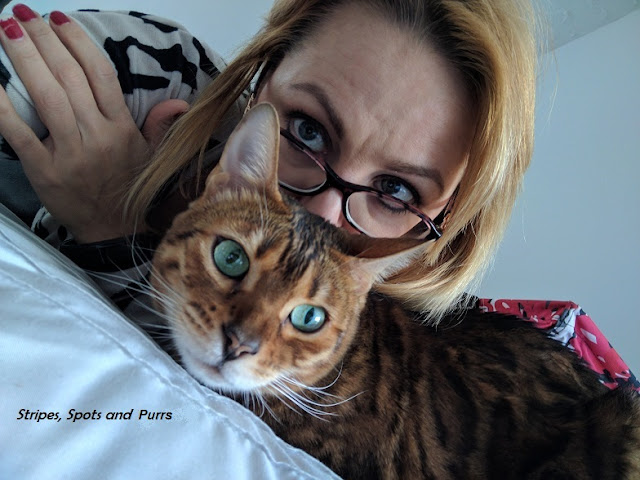 Bengal cat blogger