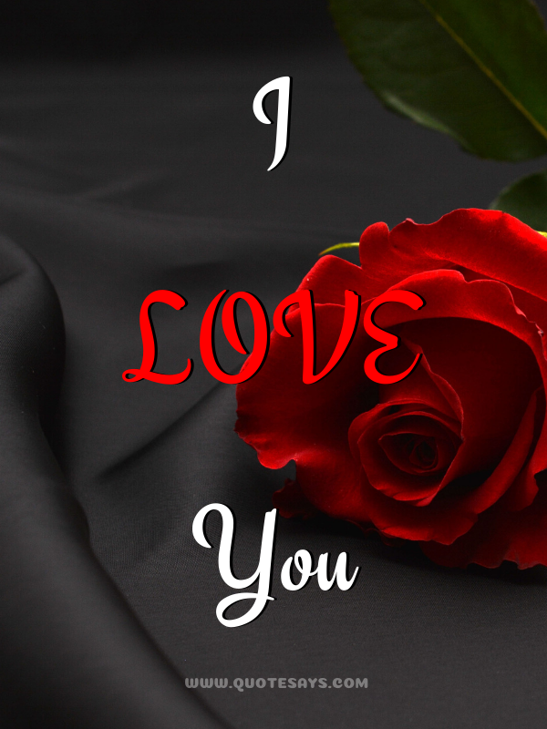 I Love You Images with Red Rose