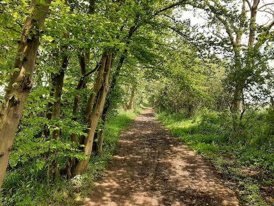 Wooded bridleway shortly after point 7