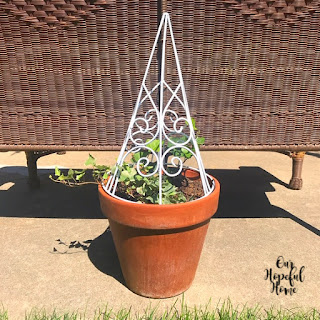 white wire planter clay flower pot ivy plant patio