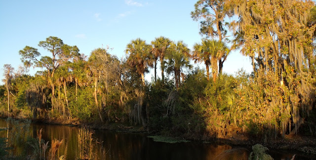 Vistas del Big Cypress National Preserve