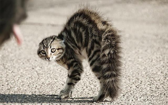 Tâm Trạng Của Loài Mèo