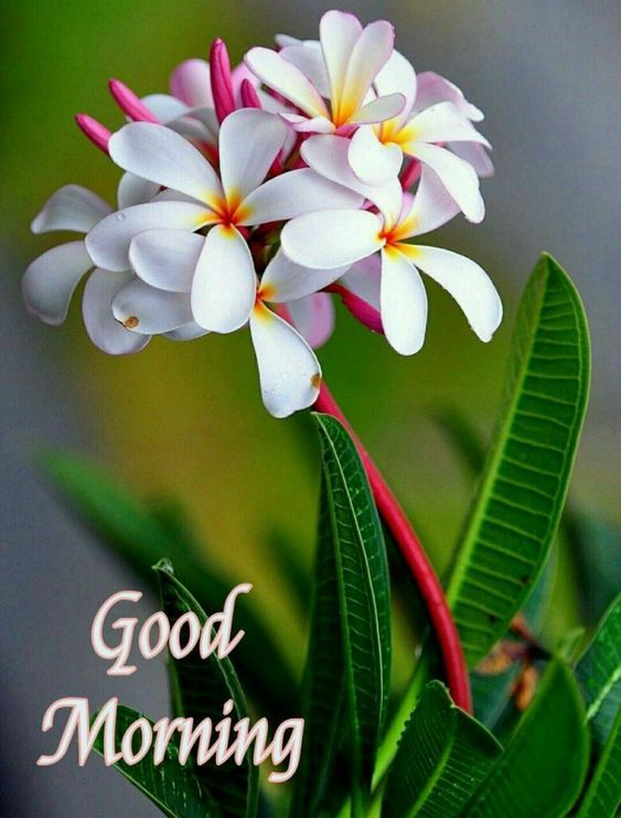 good morning have a lovely day picture