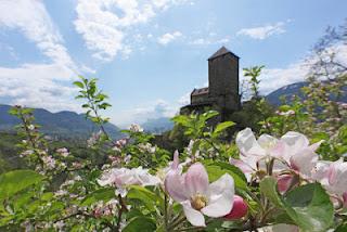 Frühlingsblick auf Schloss Tirol: Die Zeit der Apfelblüte ist von besonderer Bedeutung für das Etschtal.
