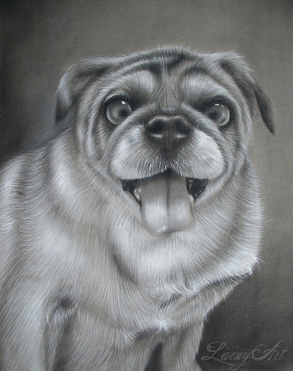 11-Shorty-Alaina-Ferguson-Lainy-Animal-Charcoal-Portrait-Drawings-www-designstack-co