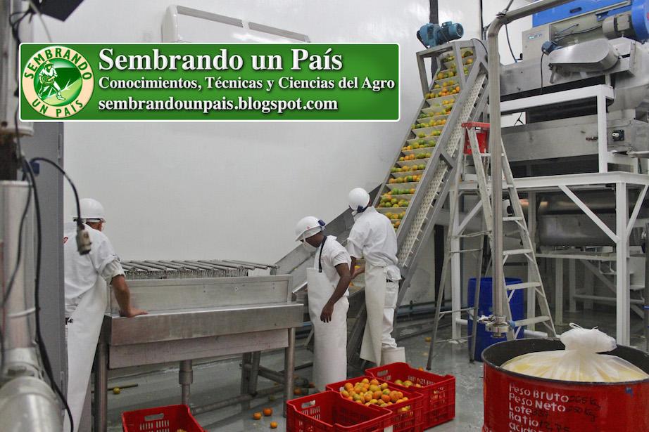 procesamiento industrial de la mandarina