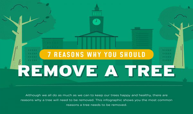 7 Why Reasons You Should Remove a Tree