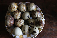 quail eggs medicinal uses