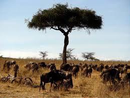 safari saburo kenia