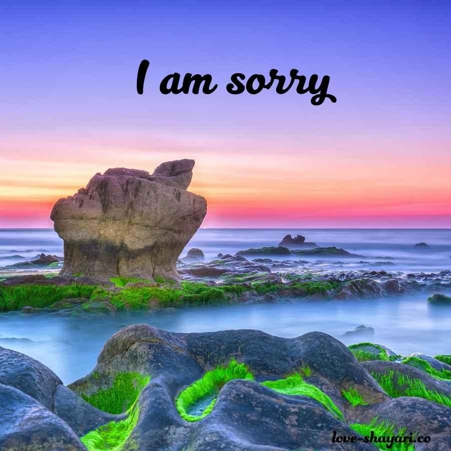 i am really sorry photo