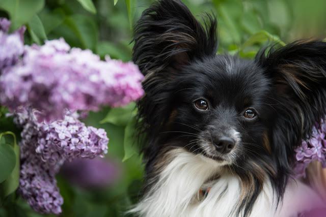 Companion Animal Psychology turns 8