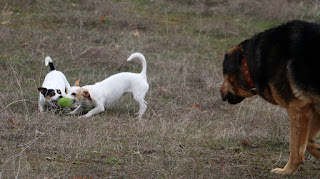 A tug of war stalemate ensues; Rambo watches on