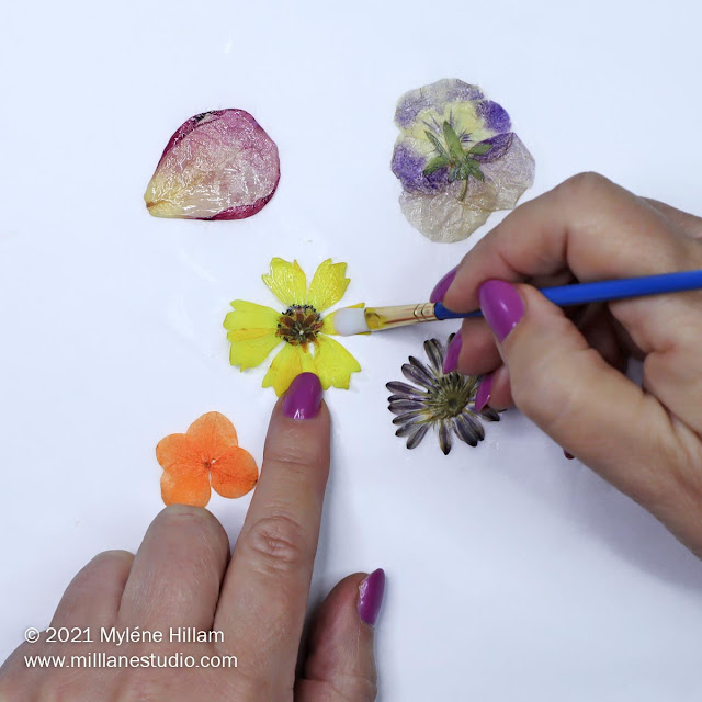 Pressed yellow cosmos flower being painted with Perfect Paper Adhesive