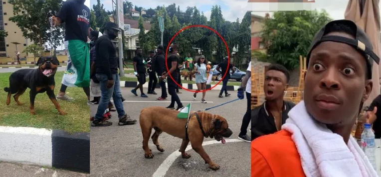 #EndSARS Peaceful Protesters Arrive With Fierce dogs To Protect Them From Hoodlums