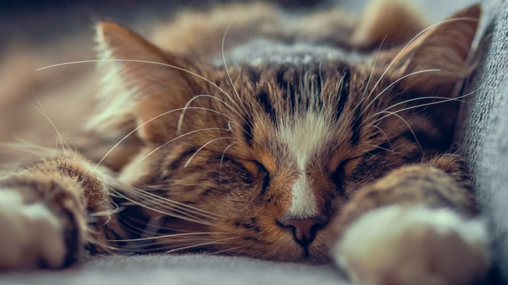 best-flea-treatment-for-cats