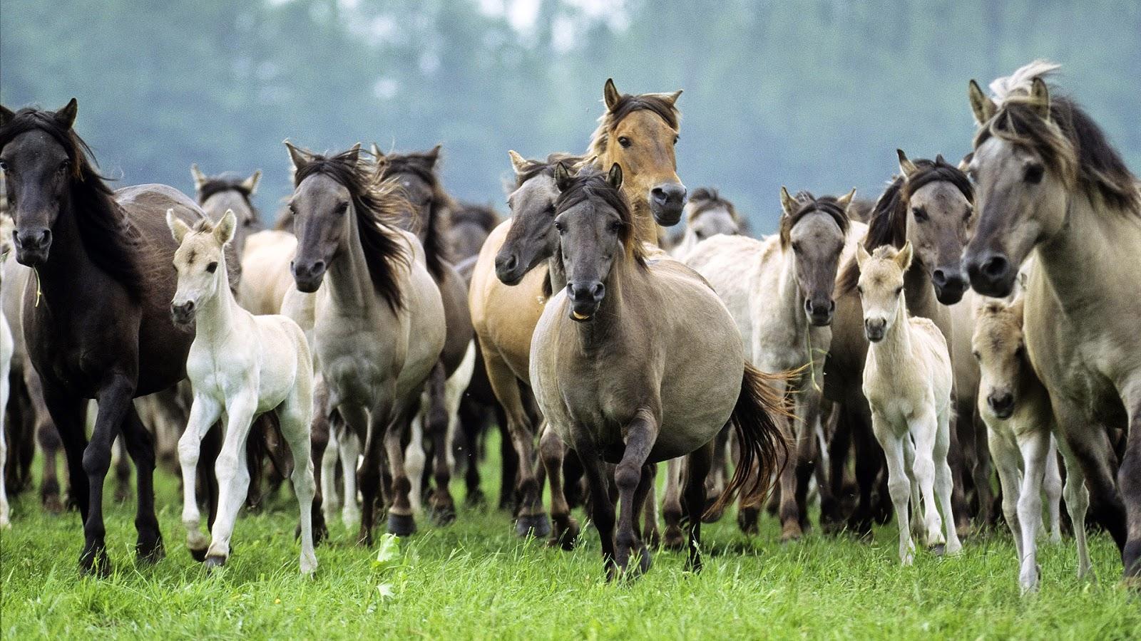 Wallpaper met groep wilde paarden