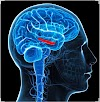 THE EFFECTS OF AIR POLLUTION ON THE BRAIN