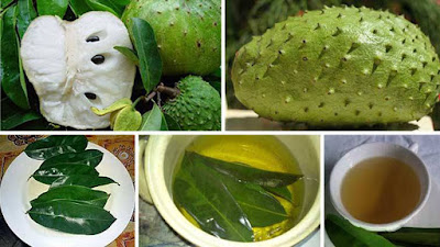 Soursop Leaves Kill Cancer Cells 1,000 Times Faster Than Chemo