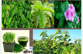 Natural way to control diabetes: Use of leaf leaves, diabetes, diabetes, prevention, use of trees