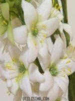 http://homemanualidades.net/flores-de-porcelana-fria-para-bodas/