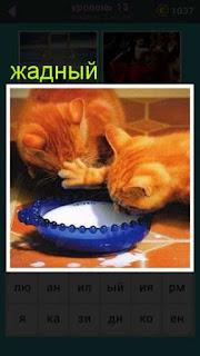 жадная кошка пьет молоко и не дает другой подойти к миске игра 667 слов 13 уровень