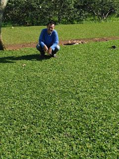 Tukang Taman Pondok Cabe