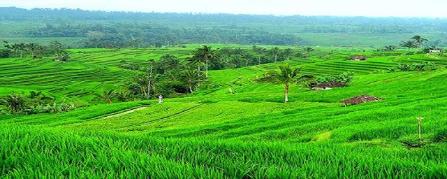 Jatiluwih rice terraces (Tabanan)