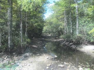 everglades loop road in big cypress national park