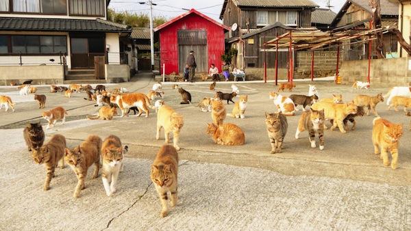 Pulau kucing Aoshima Jepang