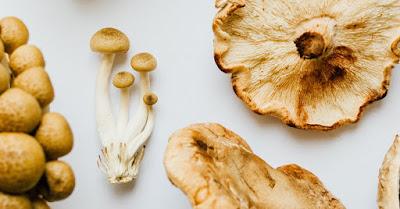 Mushroom Supplier Company in Saharanpur