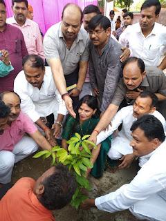 Zila Panchayat Planted Trees News In Hindi Uttar Pradesh