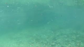 川の中を泳ぐ小魚の群れ