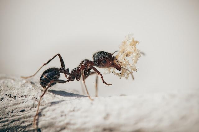 6 petua tradisi orang kampung yang anda boleh cuba untuk selesaikan masalah semut di rumah