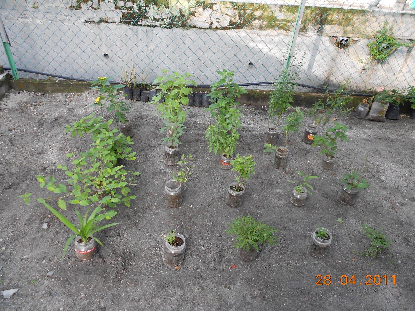 Taman Herba: Taman Herba