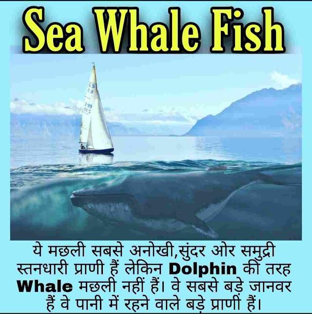 Blue Whale Fish क्या है जानिये हिंदी में - What Is blue Whale Fish In Hindi ?