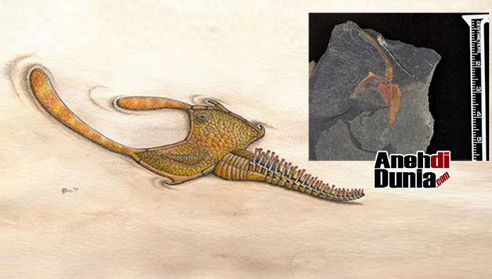 Fosil Stylophoran di Gurun Sahara