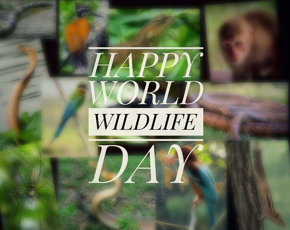 World Wildlife Day Wishes pics free download