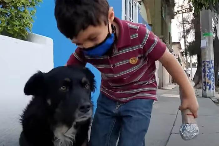 Niño entrevista de forma muy graciosa a un perrito callejero y el video se vuelve viral