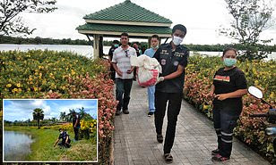 New born baby is eaten by monitor lizards in Thailand after being abandoned close to pond