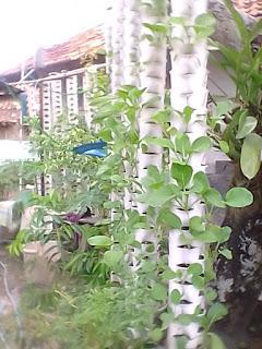 Cara cerdas berkebun di lahan yang sempit vertikal garden