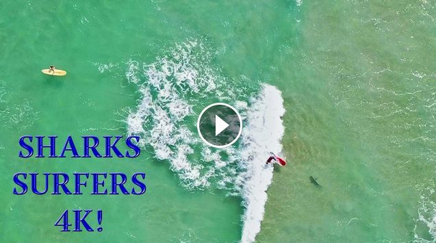 Surfer Falls on SHARK Amazing 4K Drone Footage DJI Mavic Air