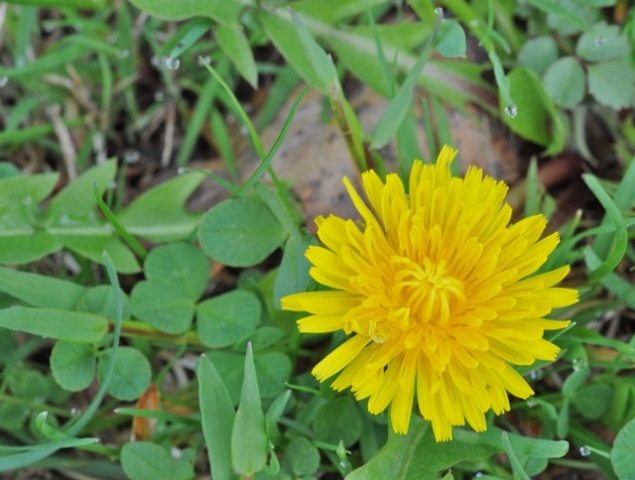 Weed Yellow Flower
